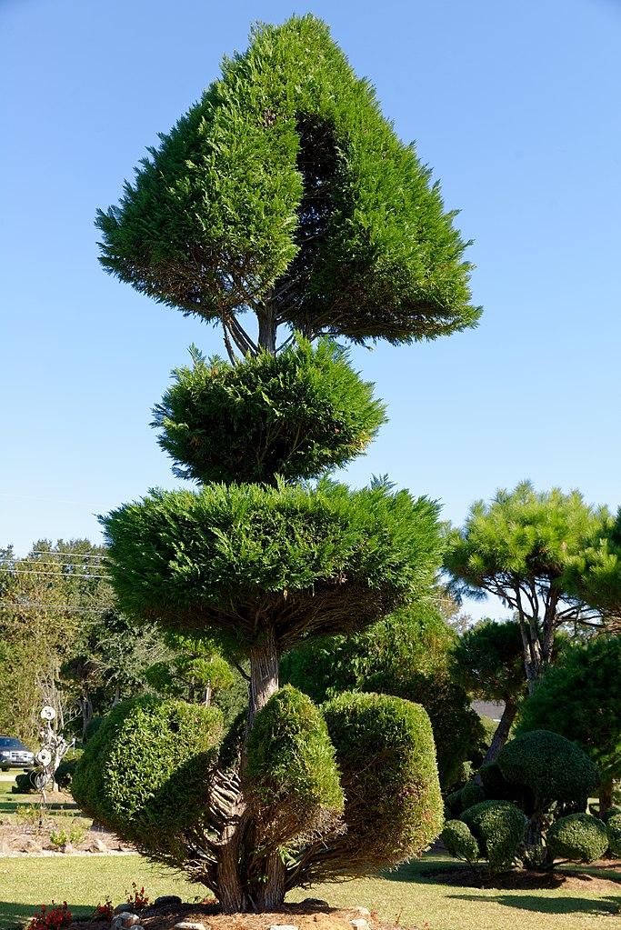 Fishbone Tree
