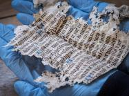 a fragment of medieval text held in two blue-gloved hands