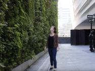 woman looks at SFMOMA Living Wall