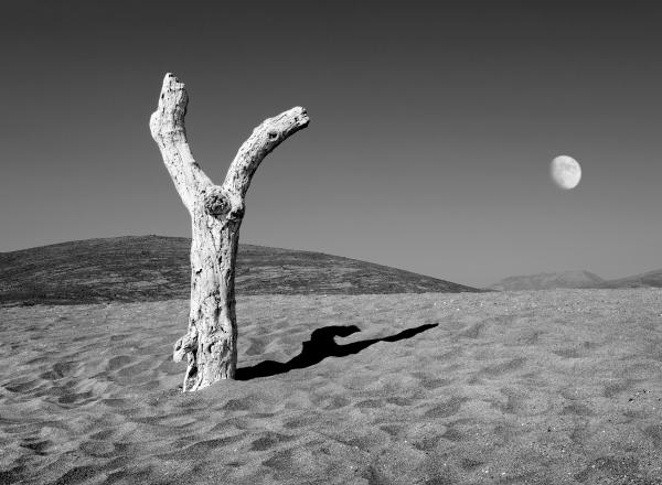 Dimitris Yeros black and white photograph of sandy landscape with a tree and the moon