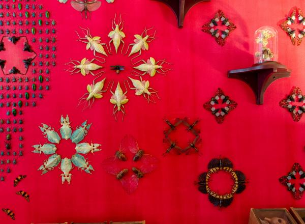 Jennifer Angus installation, a red wall with insects pinned to it arranged in intricate patterns