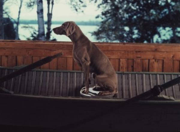 William Wegman, Sent, 1991. Color Polaroids, each 24 x 20 in.