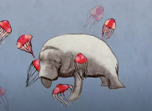 Seven Silent Songs Video Still Manatee and Jelly Fish Drawing