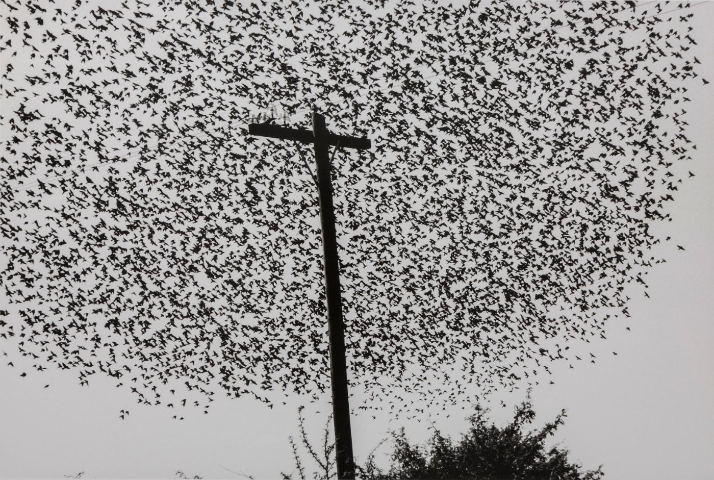 Graciela Iturbide, Birds on the Post, Highway / Pájaros en el poste, Carretera, Guanajuato, México, 1990