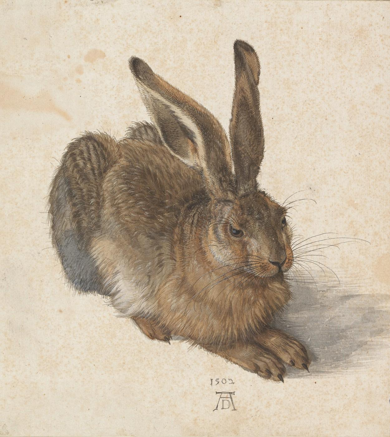 Albrecht Dürer, Young Hare, 1502. Watercolour, body colour, heightened with opaque white.