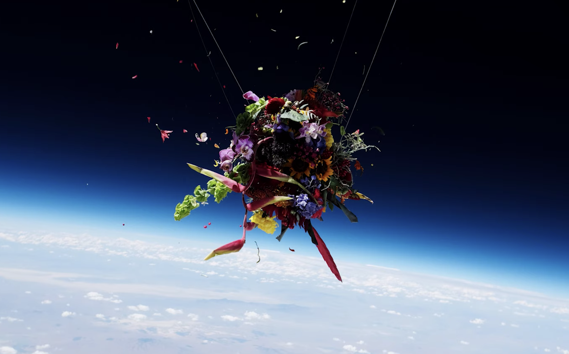 flowers floating in space above the earth