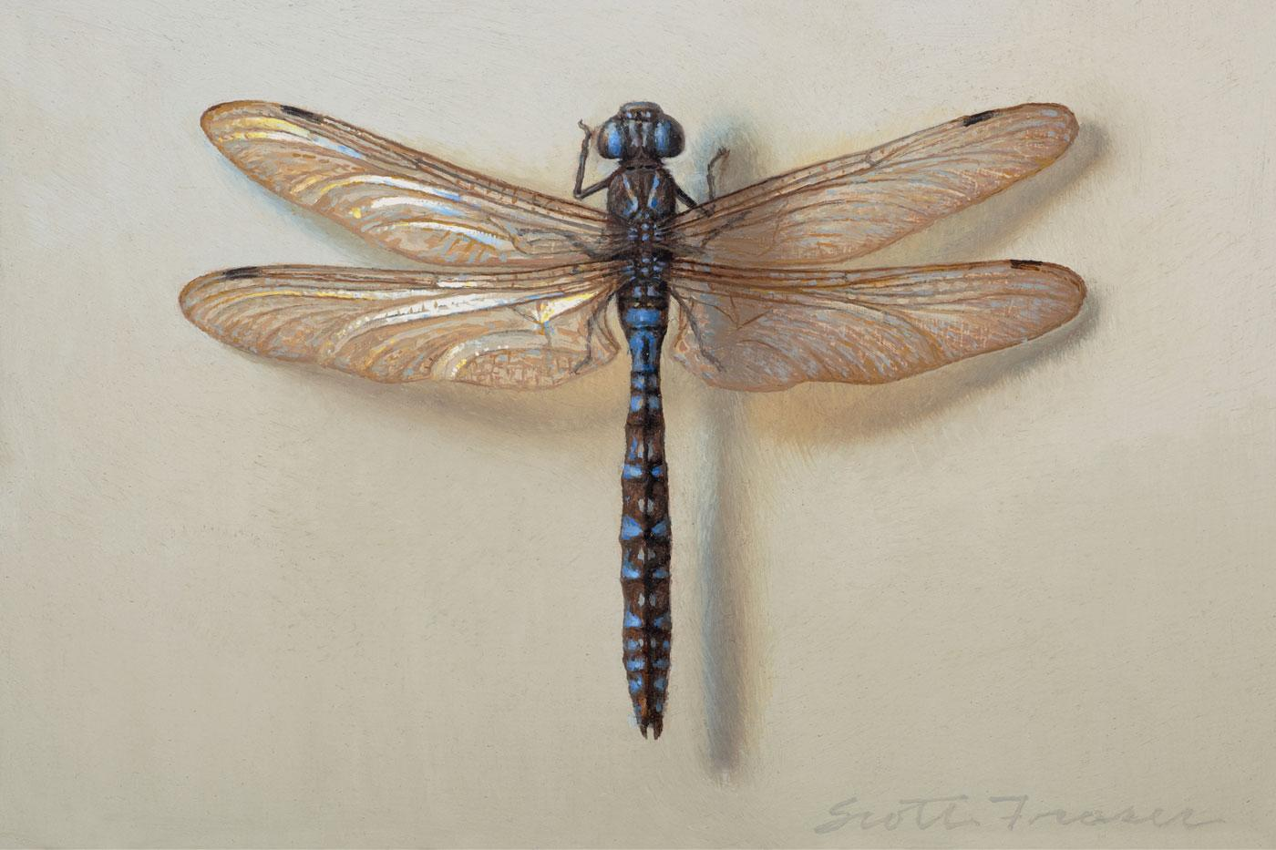 Scott Fraser realism painting Dragonfly