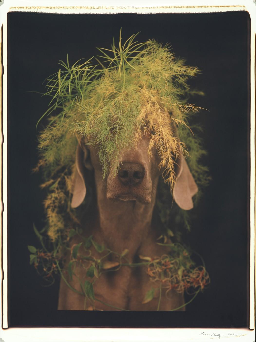 William Wegman, Feathery Greens, 2002