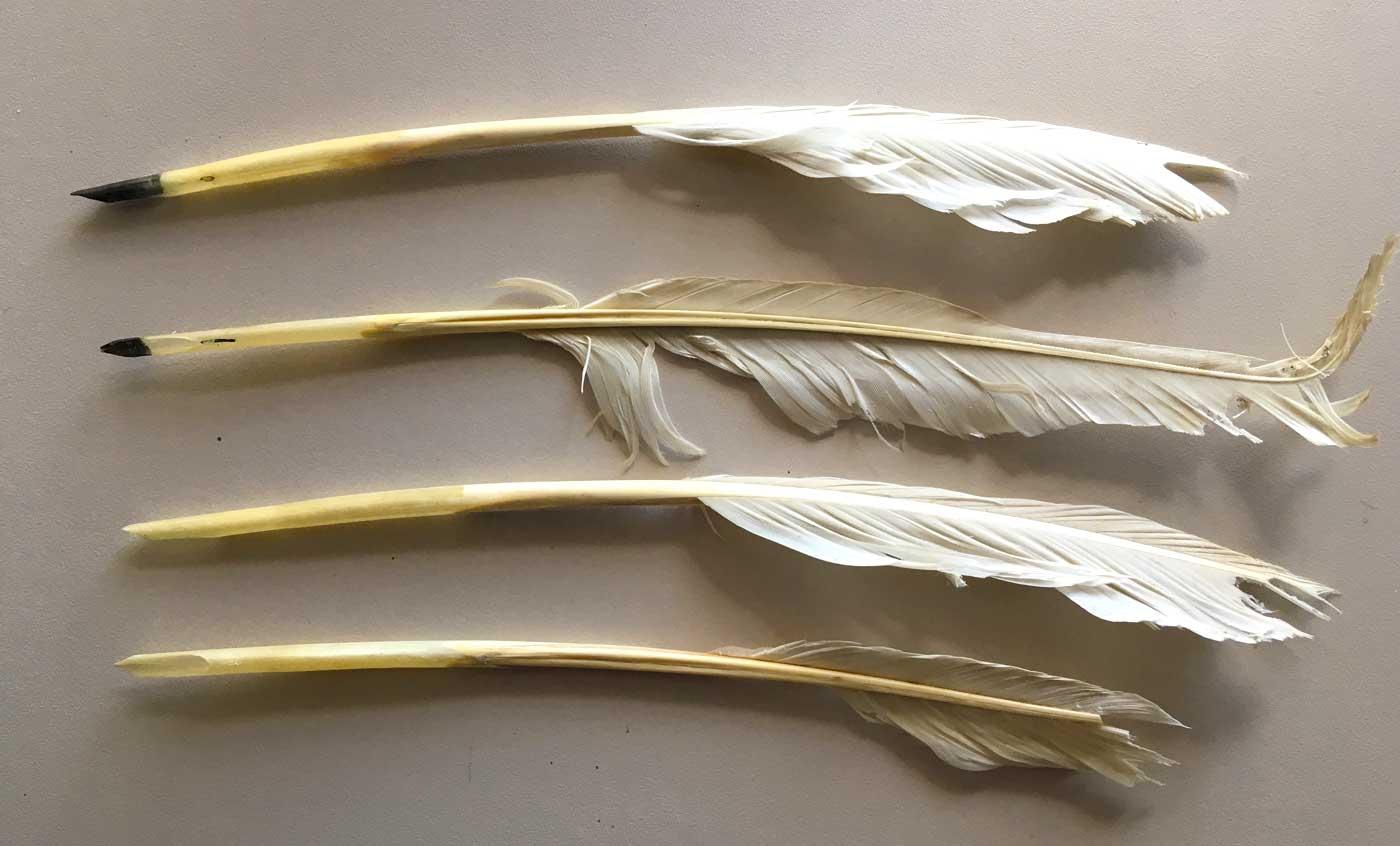 Four goose quills that were probably used by Auguste Victoria.