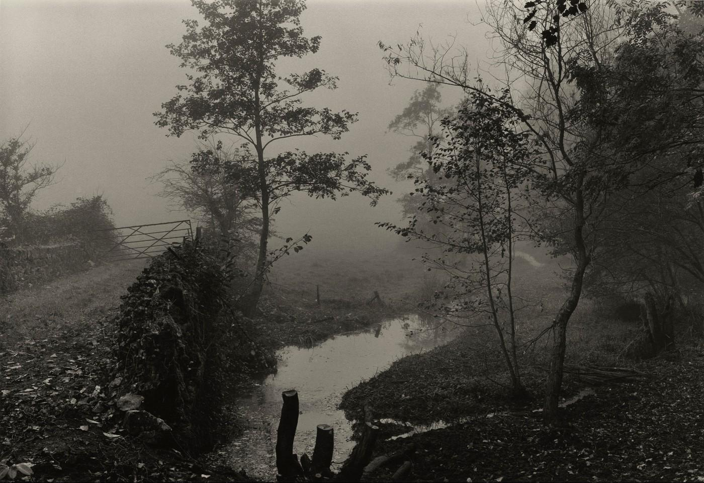 Don McCullin, Woods near My House, Somerset, c.1991