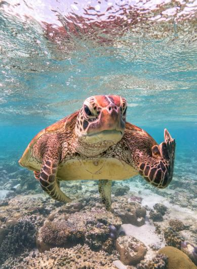 photo of a sea turtle that appears to be giving the camera the middle finger