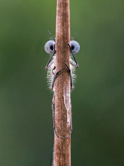 photograph of a bug hiding behind a stick